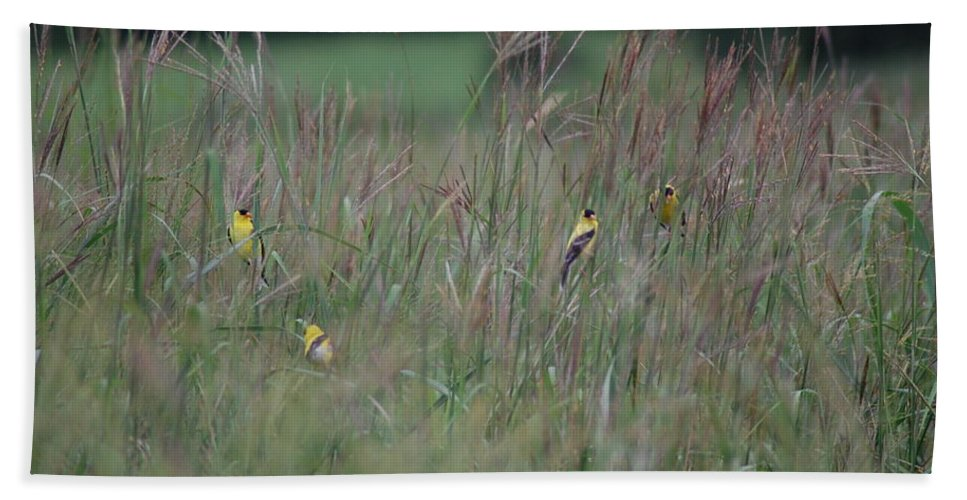 Bird Bath Sheet featuring the photograph Goldfinch Party by Susan Patrie
