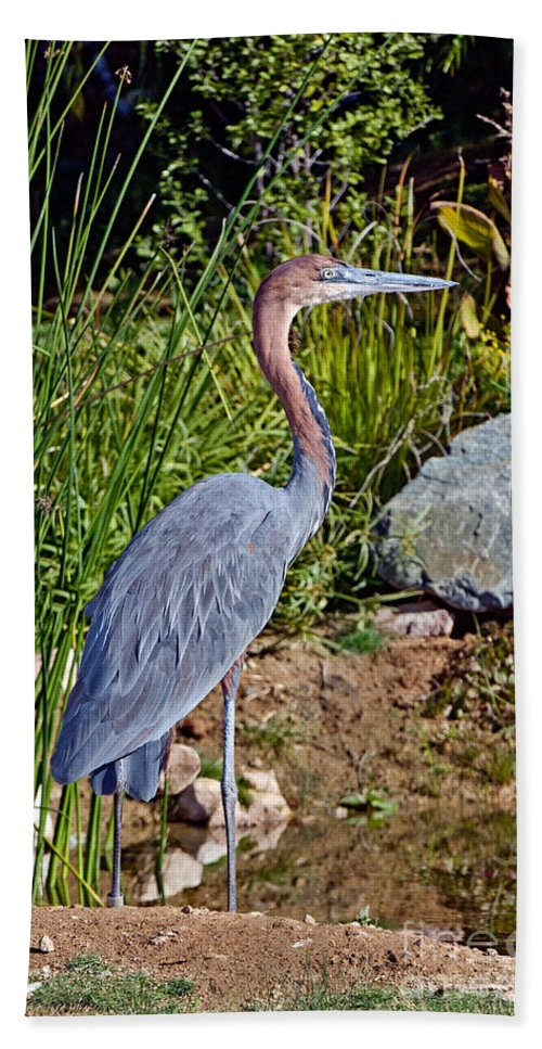 Goliath Heron Hand Towel featuring the photograph Goliath Heron By Water by Anthony Mercieca