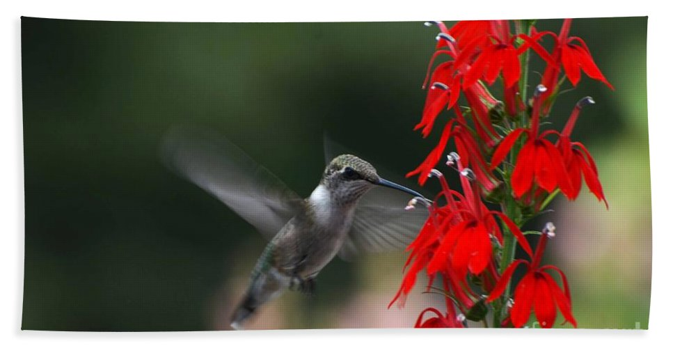 Ruby Throated Hummingbird Hand Towel featuring the photograph Good Decision by Judy Wolinsky
