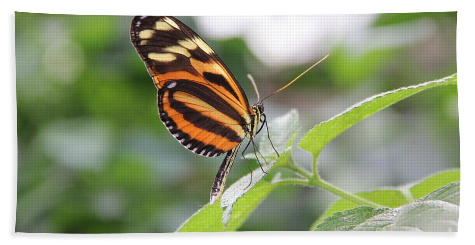 Nature Hand Towel featuring the photograph Good Morning Butterfly by Jackie Mestrom