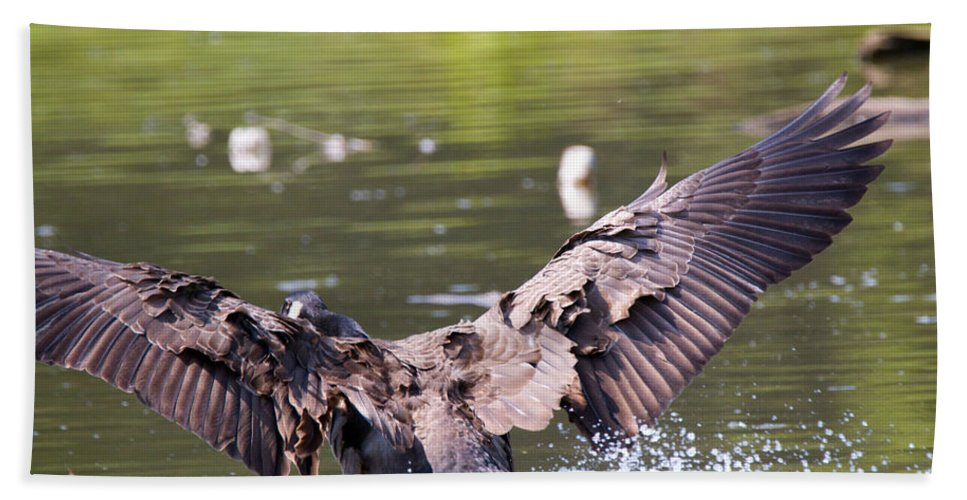 Great Blue Heron Photographs Hand Towel featuring the photograph Goose Landing II by Vernis Maxwell