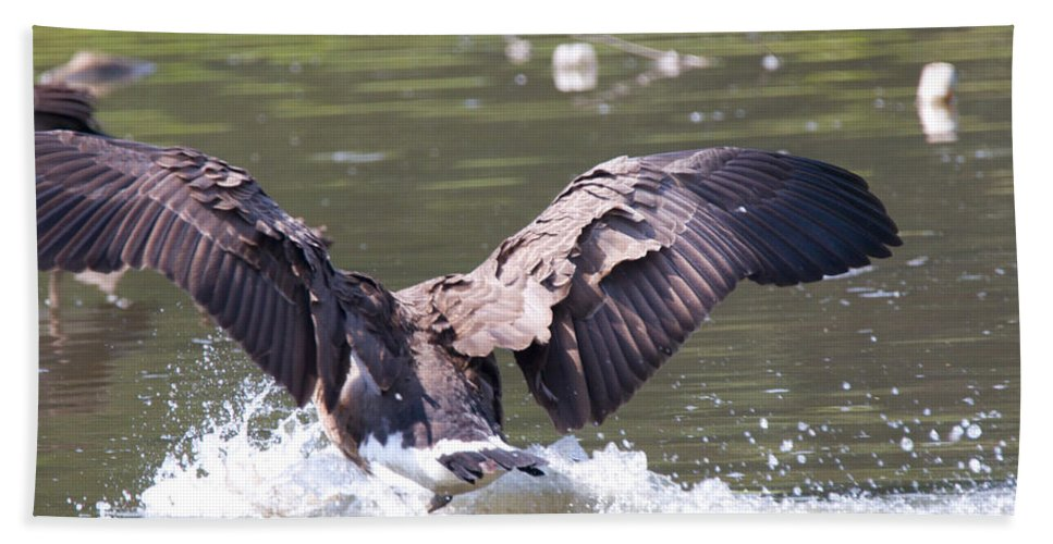Great Blue Heron Photographs Hand Towel featuring the photograph Goose Landing Iv by Vernis Maxwell