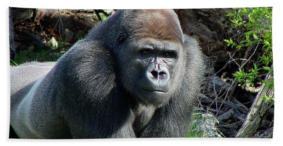 Gorilla Bath Sheet featuring the photograph Gorilla135 by Gary Gingrich Galleries
