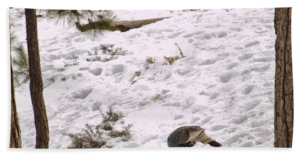 Wild Turkey Hand Towel featuring the photograph Gould's Wild Turkey Viii by Donna Greene