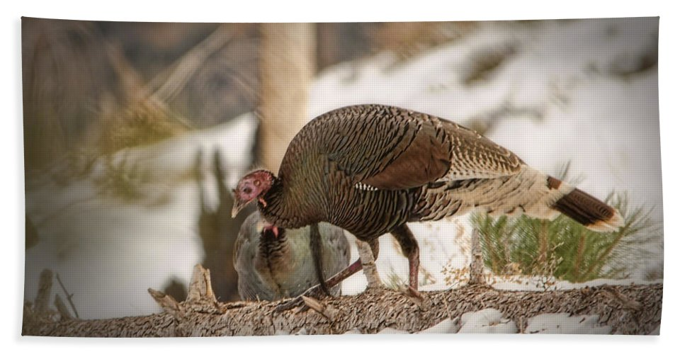 Wild Turkey Hand Towel featuring the photograph Gould's Wild Turkey Vix by Donna Greene
