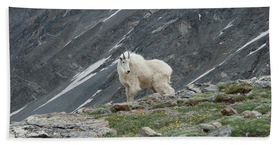 Mountain Goat Bath Sheet featuring the photograph Gq Mtn. Goat by Angus Hooper Iii