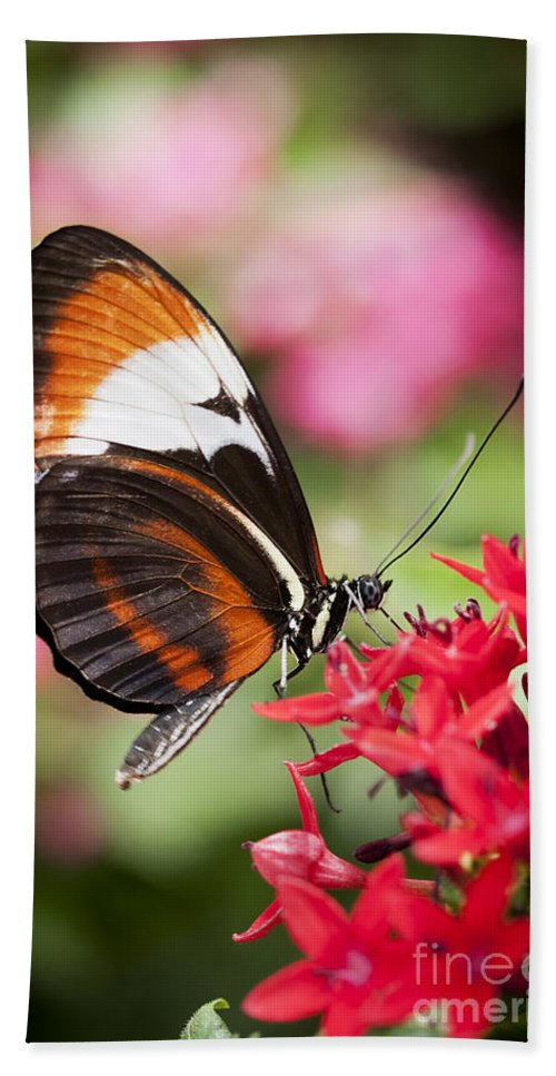 Butterfly Bath Towel featuring the photograph Grace by Patty Colabuono