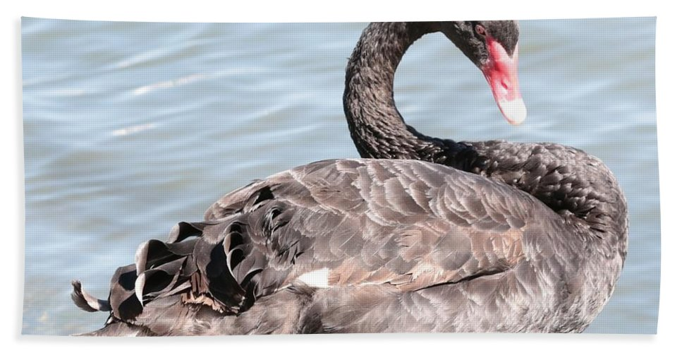 Black Swan Hand Towel featuring the photograph Graceful Black Swan by Carol Groenen