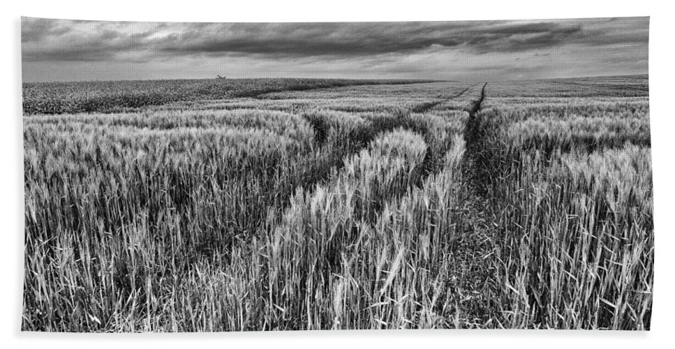 Grain Field Tracks Bath Sheet featuring the photograph Grain Field Tracks by Brothers Beerens