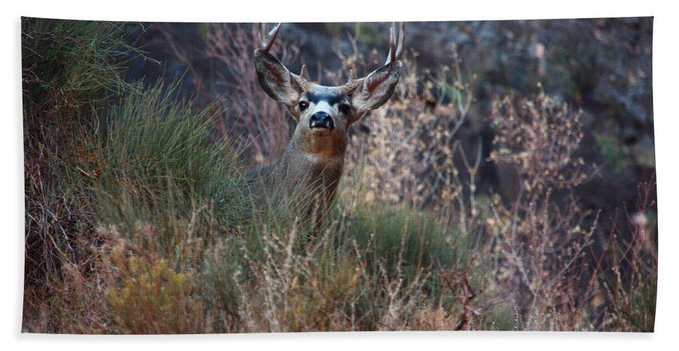 Grand Canyon Deer Hand Towel featuring the photograph Grand Canyon Deer by Aidan Moran