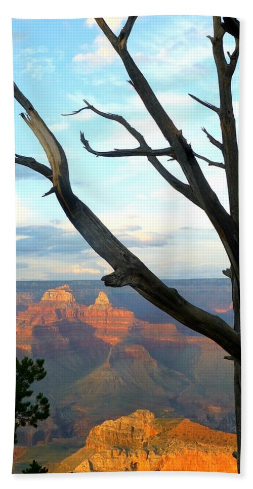 Arizona Hand Towel featuring the photograph Grand Canyon Tree by Toby McGuire