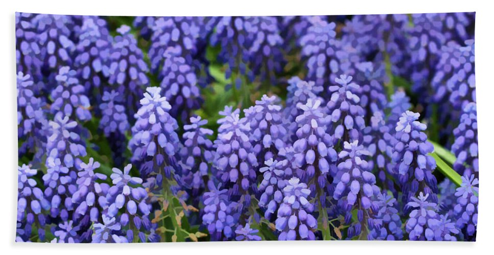 Grape Hyacinth Hand Towel featuring the photograph Grape Hyacinth At Thanksgiving Point - 1 by Ely Arsha