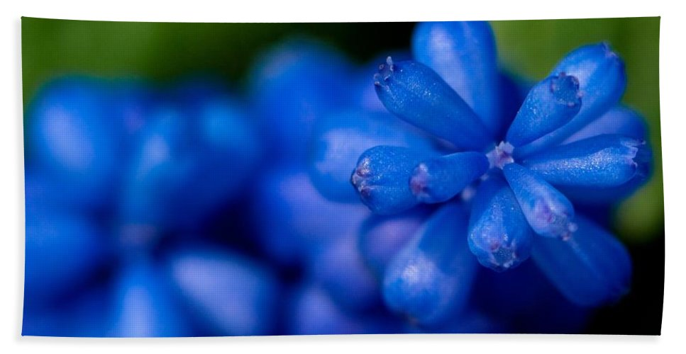 Blue Grape Bath Sheet featuring the photograph Grape Hyacinth by Brothers Beerens
