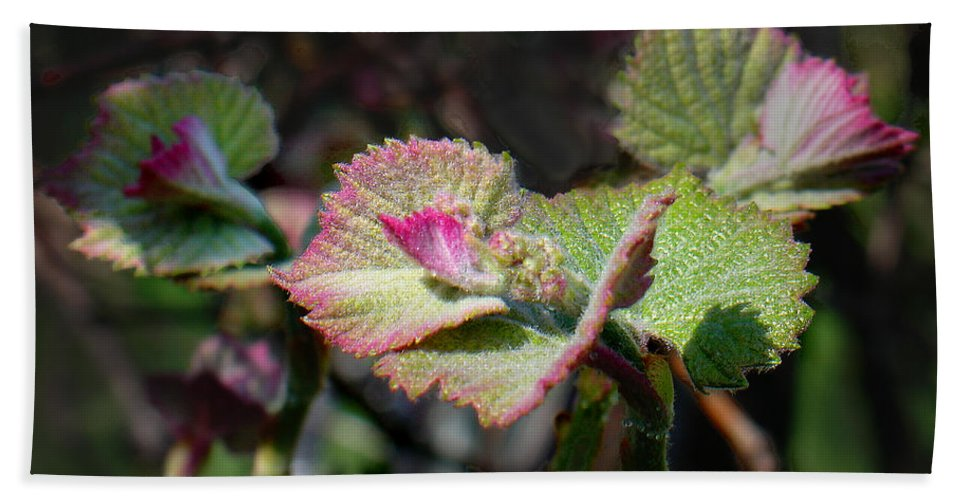 Grape Leaves Hand Towel featuring the photograph Grape Leaves In Spring by Steve Karol