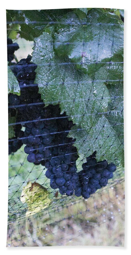 Grapes Hand Towel featuring the photograph Grapes by Lee Hartsell