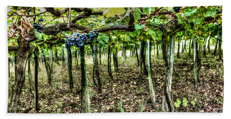 Grape Hand Towel featuring the photograph Grapes On A Vineyard by Weston Westmoreland