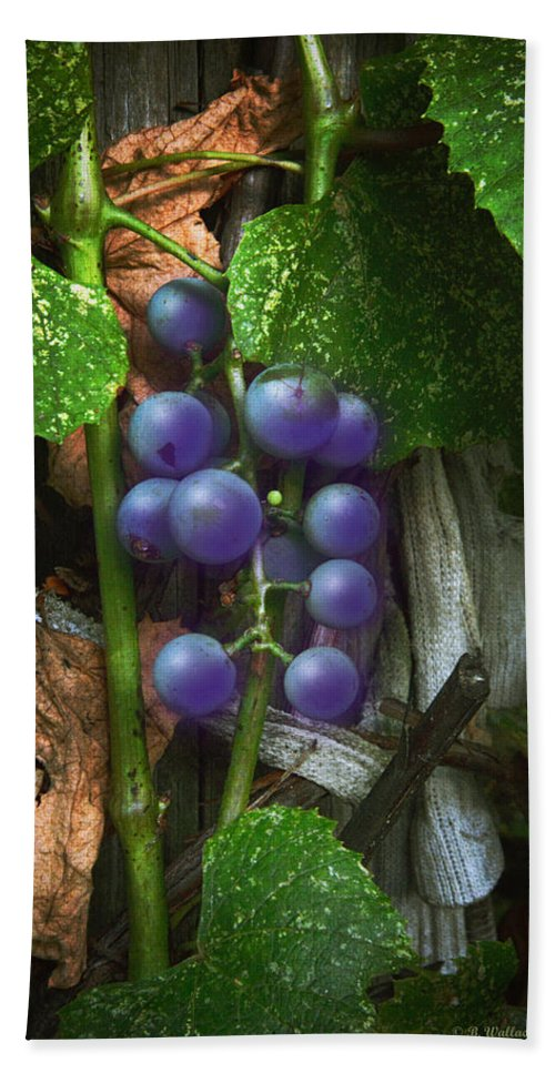2d Hand Towel featuring the photograph Grapes On The Vine by Brian Wallace