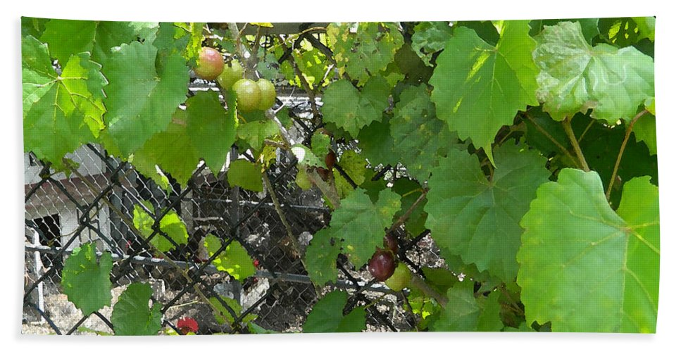 Grapes Bath Sheet featuring the painting Grapes On The Vine by George Pedro
