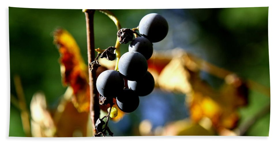 Grape Bath Sheet featuring the photograph Grapes On The Vine No.2 by Neal Eslinger