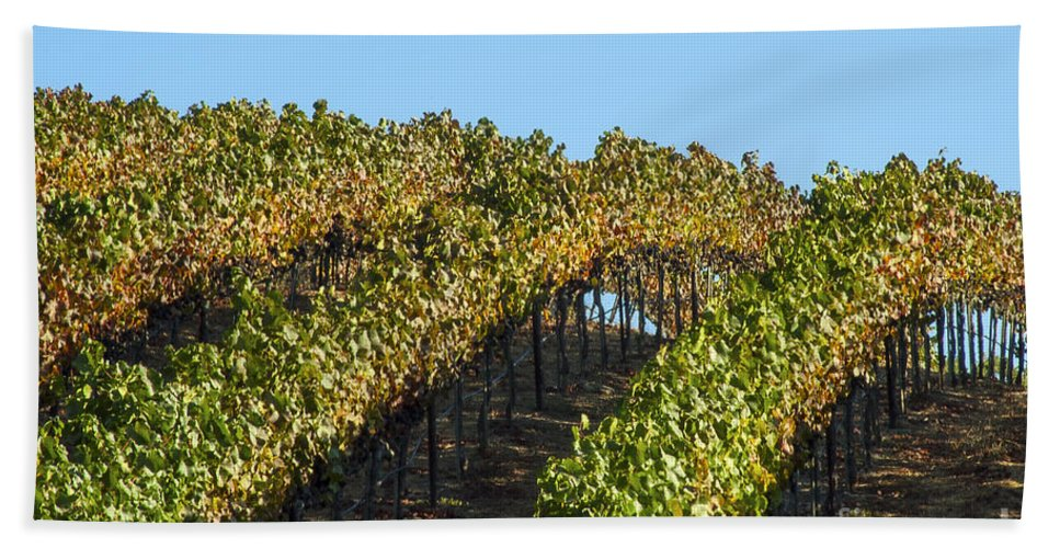 Napa Valley California Wineries Winery Grapevine Grapevines Row Rows Landscape Landscapes Plant Plants Vineyard Vineyards Hand Towel featuring the photograph Grapevines by Bob Phillips