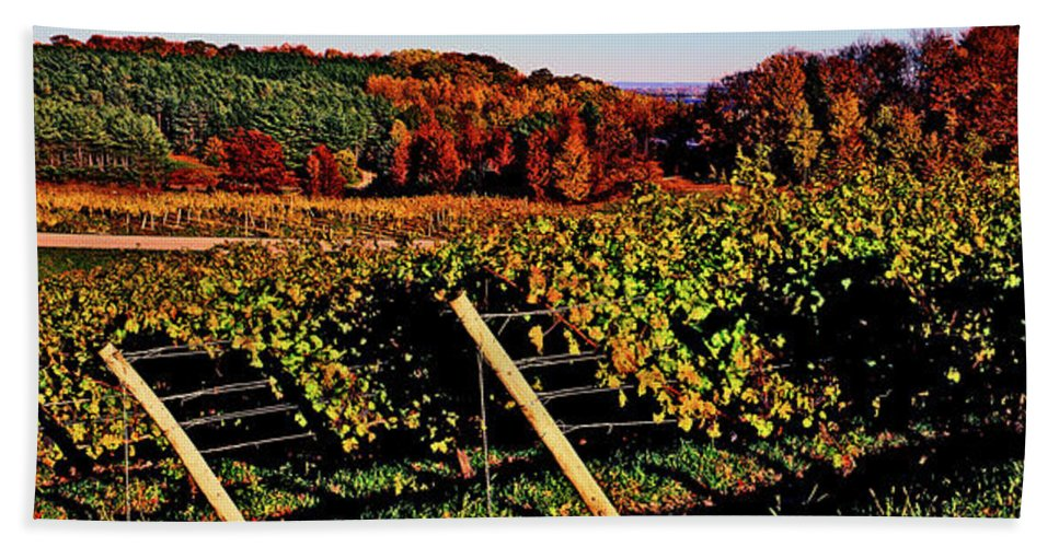 Photography Bath Sheet featuring the photograph Grapevines In Vineyard, Traverse City by Panoramic Images