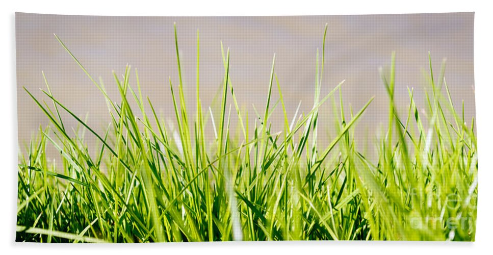 Outdoor Hand Towel featuring the photograph Grass Blades by Tim Hester