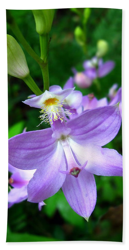 Calopogon Tuberosus Hand Towel featuring the photograph Grass Pink Orchid by William Tanneberger