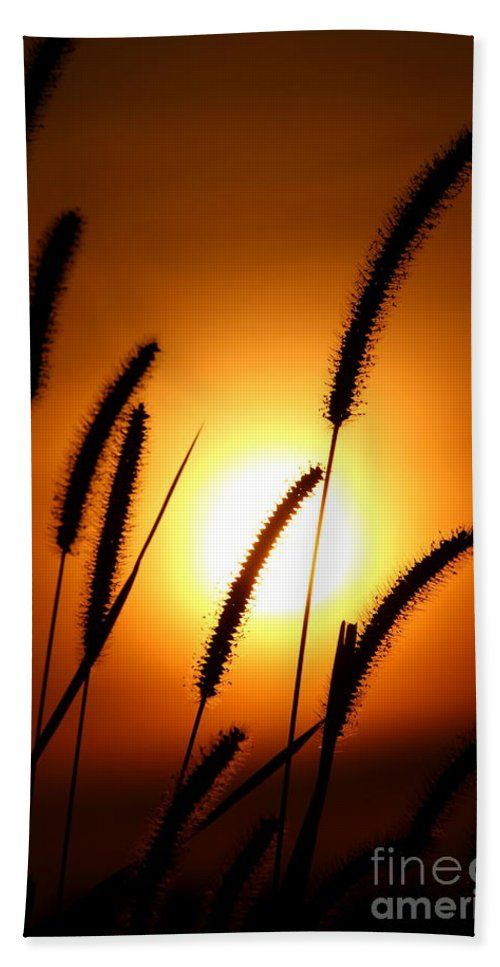 Sun Bath Sheet featuring the photograph Grasses At Sunset - 1 by Kenny Glotfelty