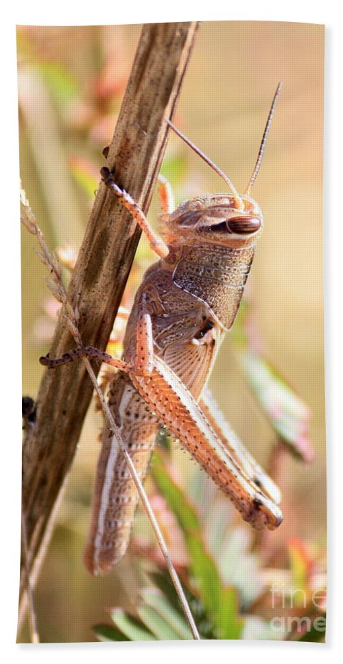Grasshopper Bath Sheet featuring the photograph Grasshopper In The Marsh by Carol Groenen