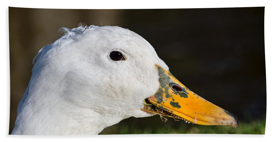 Duck Hand Towel featuring the photograph Grassy-bill Duck by Susie Peek