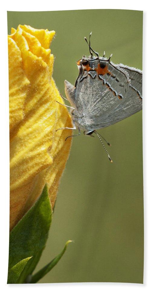 Strymon Melinus Bath Sheet featuring the photograph Gray Hairstreak Butterfly by Kathy Clark