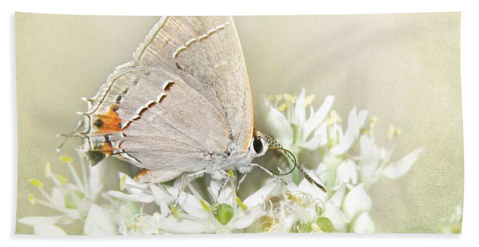 Blossom Bath Sheet featuring the photograph Gray Hairstreak IIi by David and Carol Kelly