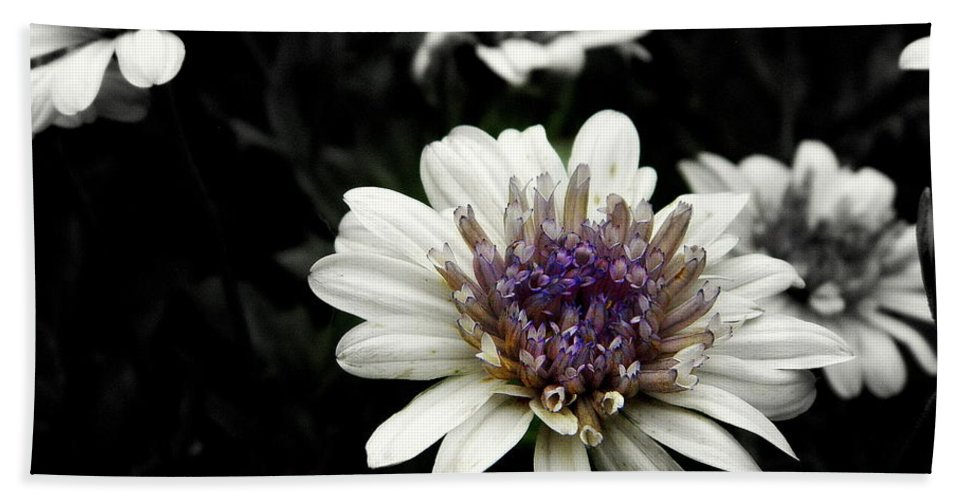 Flower Hand Towel featuring the photograph Gray Petals by Kathy Barney