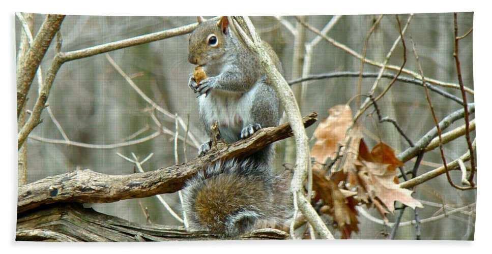 Squirrel Hand Towel featuring the photograph Gray Squirrel - Sciurus Carolinensis by Mother Nature