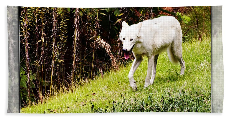 Gray Wolf Bath Sheet featuring the photograph Gray Wolf 2 by Walter Herrit