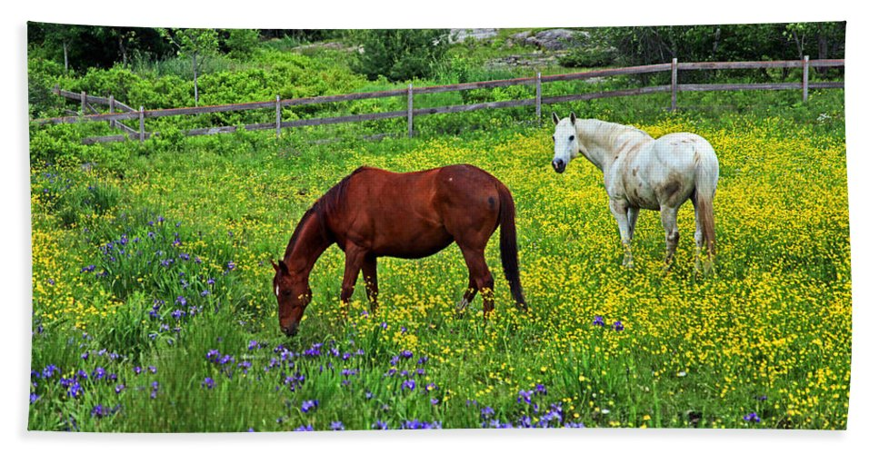 Horses Bath Sheet featuring the photograph Grazing Amongst The Wildflowers by Karol Livote