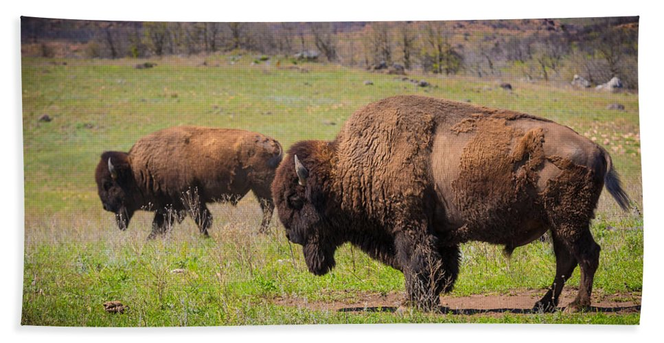 America Hand Towel featuring the photograph Grazing Bison by Inge Johnsson