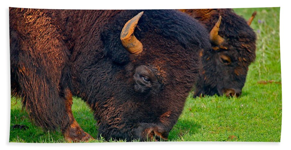 Buffalo Bath Sheet featuring the photograph Grazing Buffaloes by Denise Mazzocco