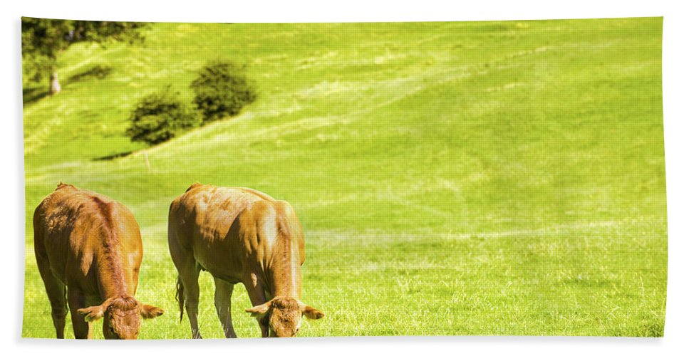 Grazing Hand Towel featuring the photograph Grazing Cows by Amanda Elwell