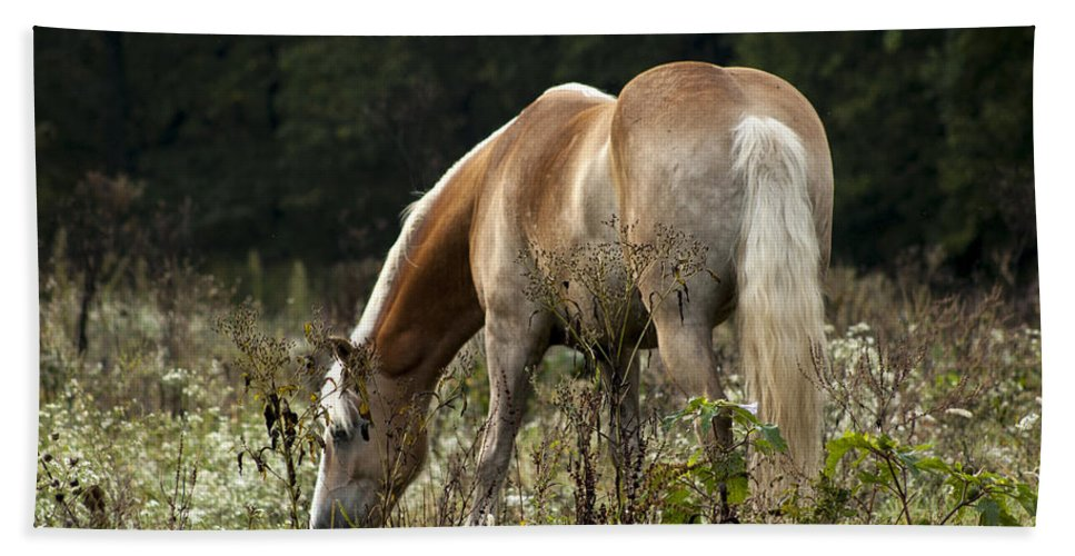 Horse Bath Sheet featuring the photograph Grazing Days by Annette Persinger