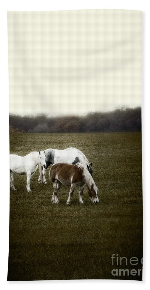Horse; Mammal; Eating; Grazing; Pony; Field; Grass; Nature; Rural; Farm; Animal; Three; Group; Fall; Autumn; Trees; Graze; Eat; Farmyard; Country; Countryside; Outside; Outdoors; Nature; Pasture Hand Towel featuring the photograph Grazing by Margie Hurwich