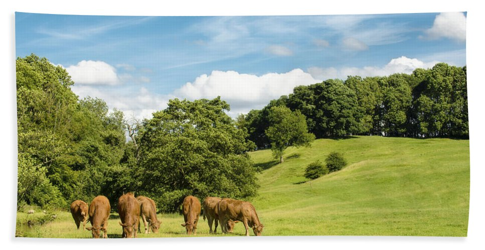 Grazing Hand Towel featuring the photograph Grazing Summer Cows by Amanda Elwell