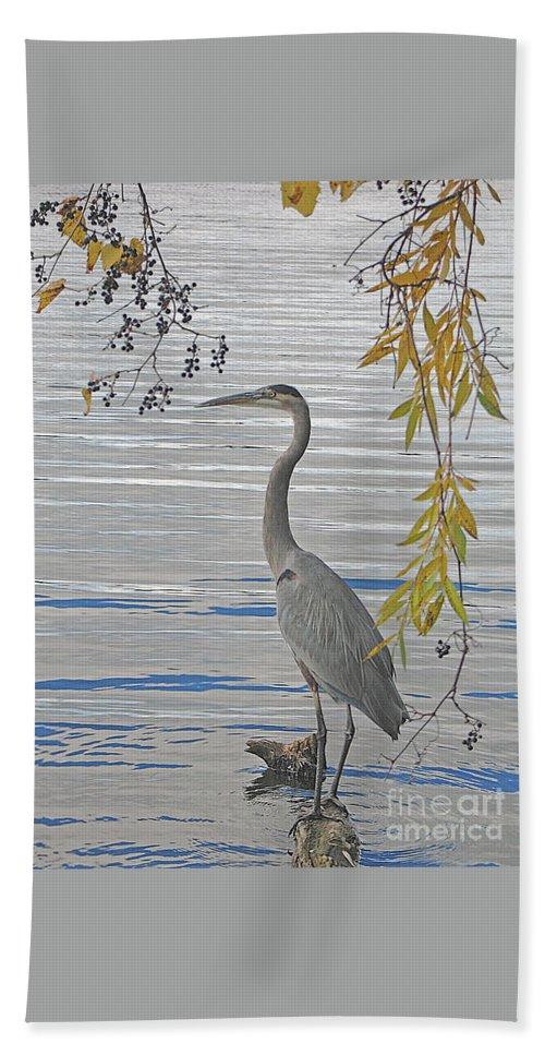 Heron Bath Sheet featuring the photograph Great Blue Heron by Ann Horn
