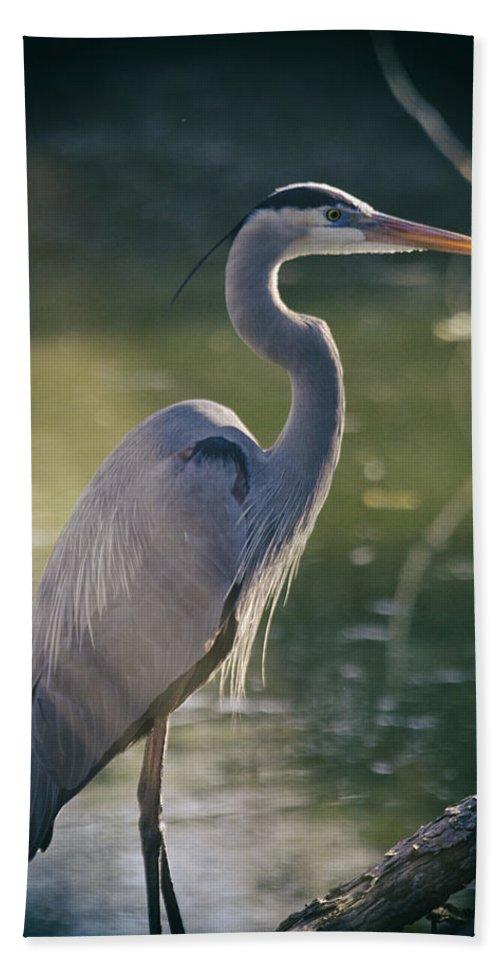 Great Blue Heron Bath Sheet featuring the photograph Great Blue Heron At Sunset by Saija Lehtonen