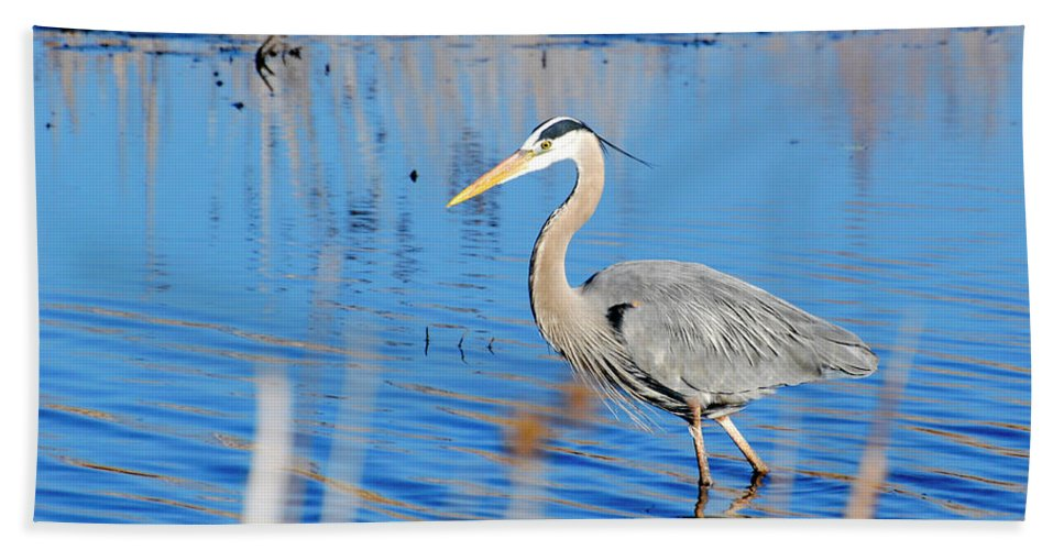 Great Blue Heron Bath Sheet featuring the photograph Great Blue Heron by Crystal Wightman