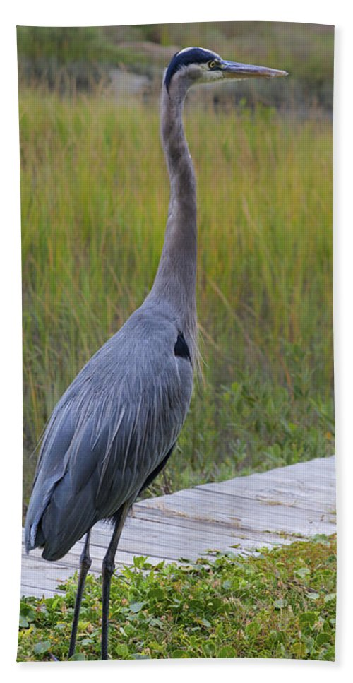 Great Blue Heron Hand Towel featuring the photograph Great Blue Heron by Diane Macdonald