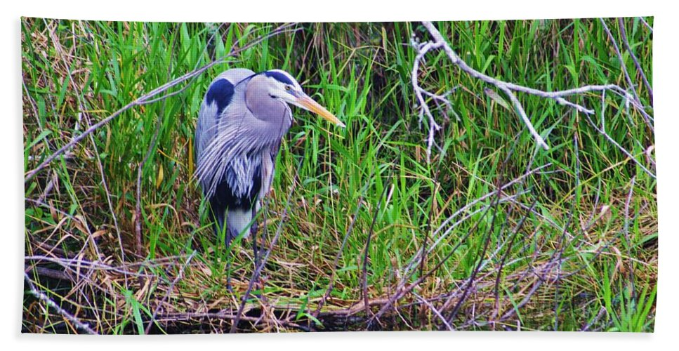 Great Blue Heron Bath Sheet featuring the photograph Great Blue Heron In Nature by Chuck Hicks