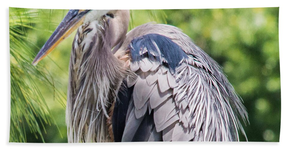 susan Molnar Bath Sheet featuring the photograph Great Blue Heron Iv by Susan Molnar