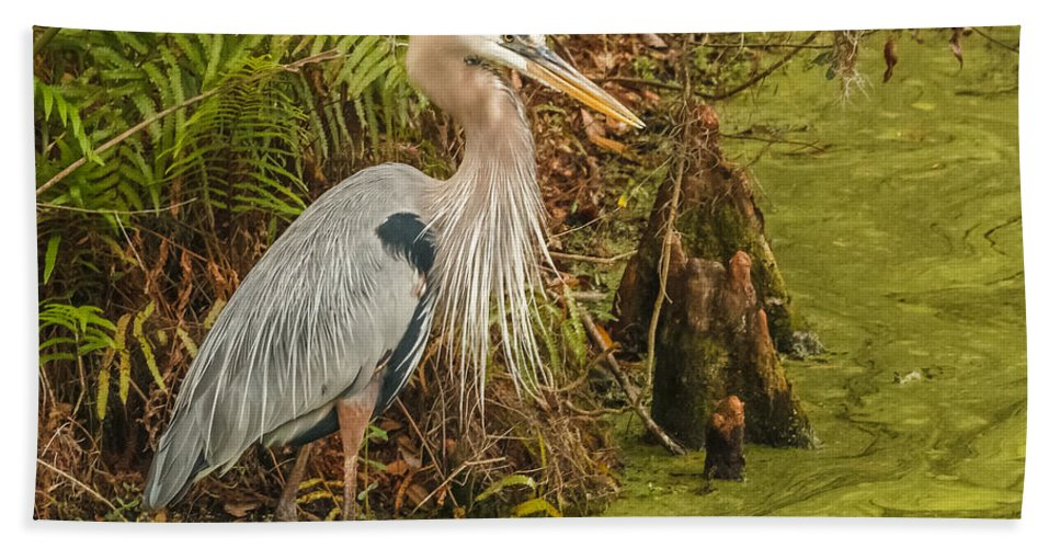 Florida Bath Sheet featuring the photograph Great Blue Heron by Jane Luxton
