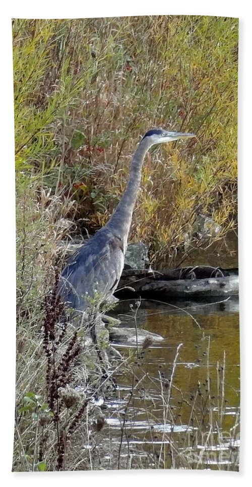 Great Blue Heron Bath Sheet featuring the photograph Great Blue Heron - Juvenile by Laurel Best